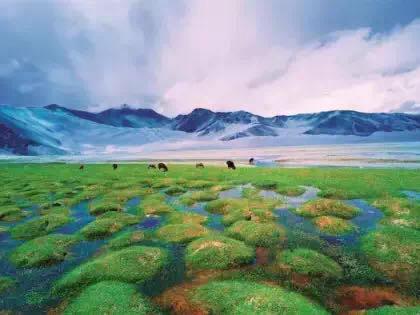 丈量河山寻访人文 他带回桂湘疆地道风物 年营收300万