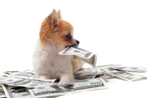 他的宠物互助计划覆盖30城50店 3千铲屎官花100元享猫狗疾病保障