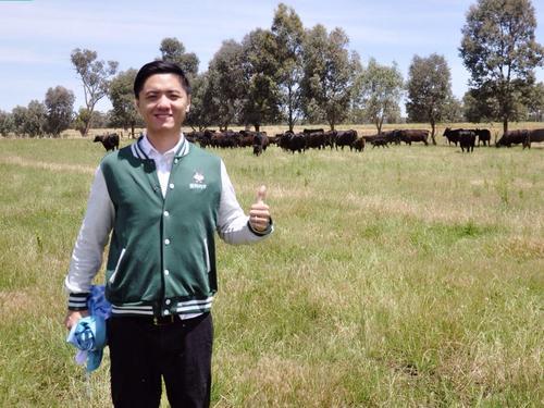 首发   他融500万漂洋过海去养牛 5千元托付澳洲牛崽一生 销售额5千万