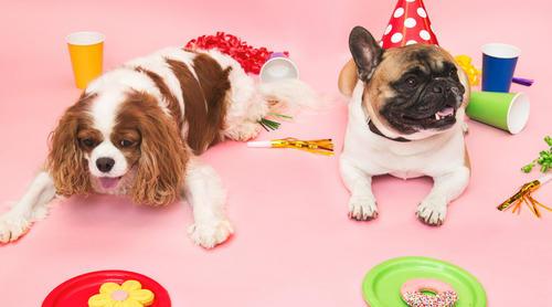狗狗也有身份证了!他上线汪卡小程序惹主子撸狗投食 日均PV1万