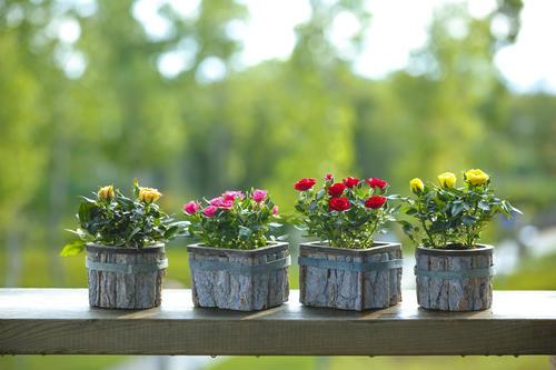 这位卖花姑娘拿了近1亿融资 建11.2万㎡温室年产2000万盆鲜花