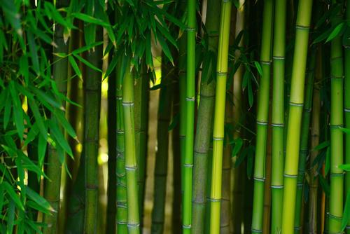 独家追踪 | 专注竹材工业化应用 极米科技获得启迪之星投资