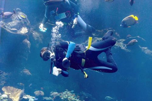 放着律所合伙人不做偏要潜水旅行 她聚百余潜店为1万潜水迷定出行规划