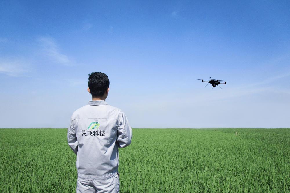 """""""麦飞科技""""的飞手正在田间操作无人机,对大田进行精准施药。"""