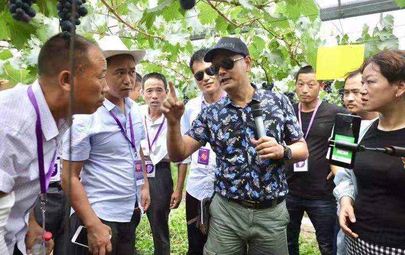 葡萄专家徐卫东在果园实地教学